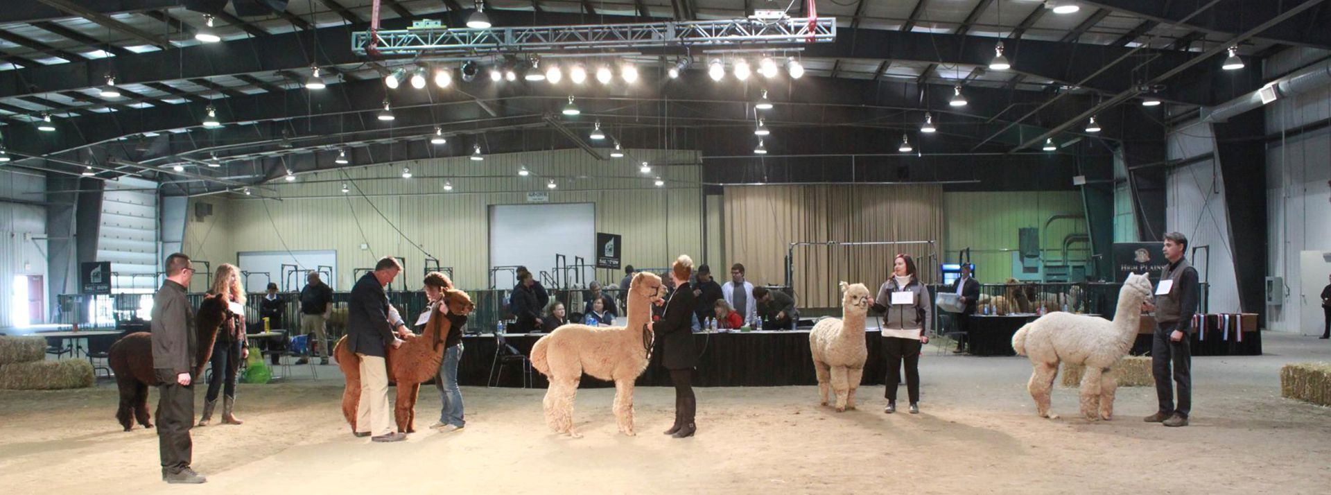 Canadian National Alpaca Show & Futurity